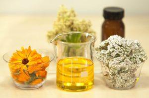 rman zdravilni učinki
