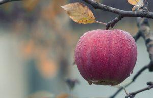 Dieta z jabolki – poznate jabolčni sir?