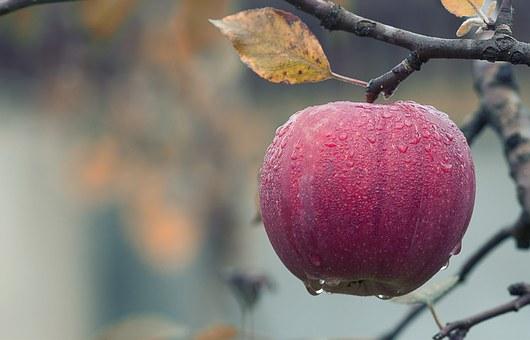 kako shujšati z jabolki