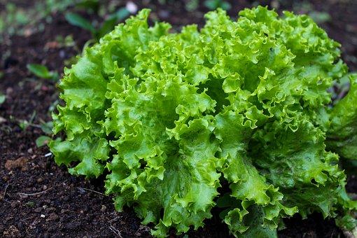 Zdrava hrana – posezite po doma pridelani hrani!