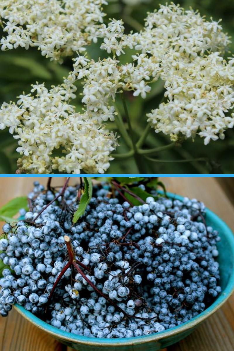 Bezeg – zdravile lastnosti in recepti s cvetovi in jagodami
