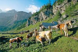planine v Sloveniji